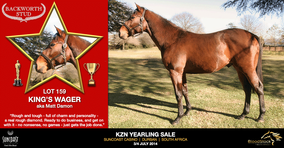 kzn yearling sale lot 159 kins wager