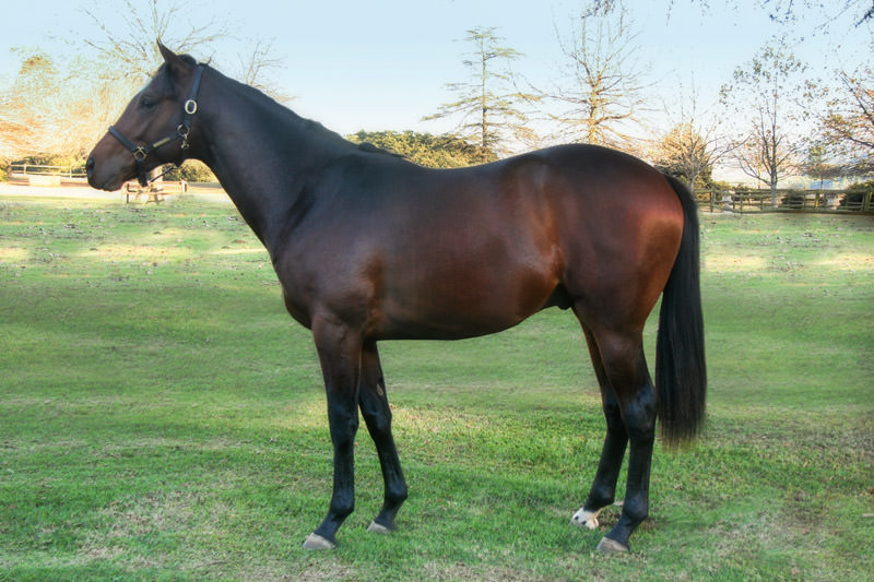 KZN Yearling Sale - Lot 9 - positivo - miesque's approval - rise again