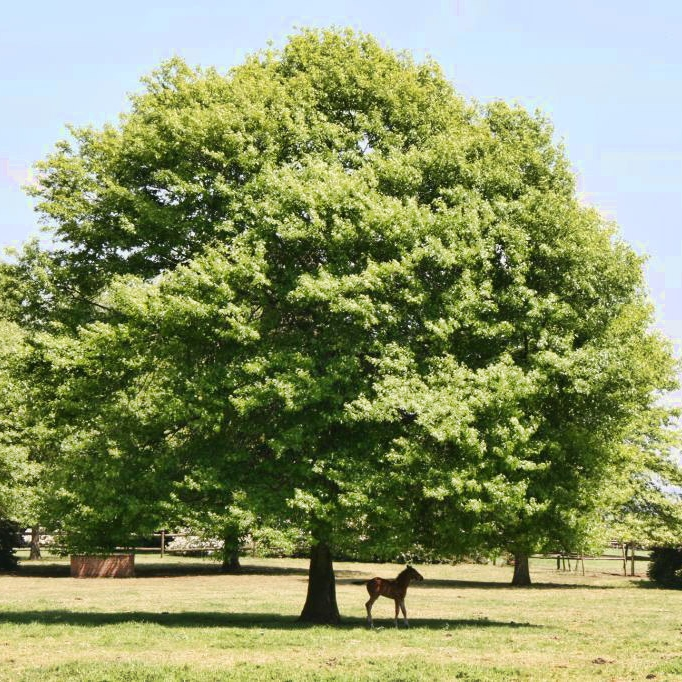 foal-under-tree.jpg