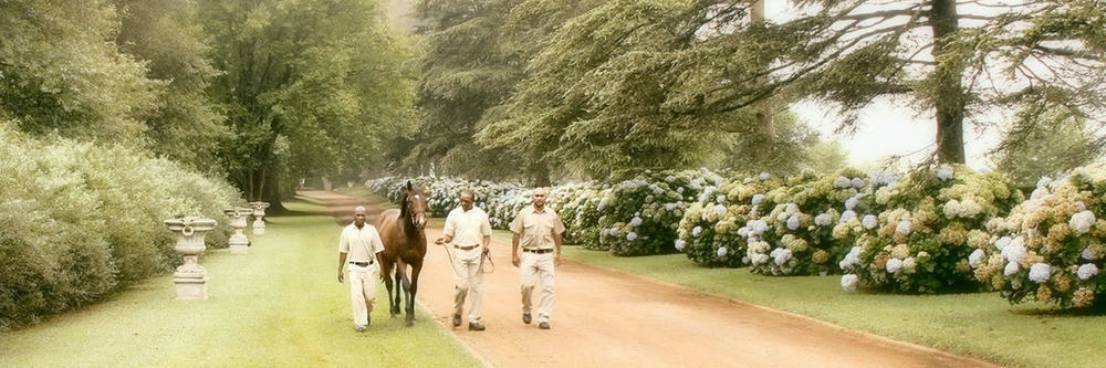 Boutique Thoroughbred Breeding Establishment  Eston, KwaZulu-Natal, South Africa   Meet Out Team