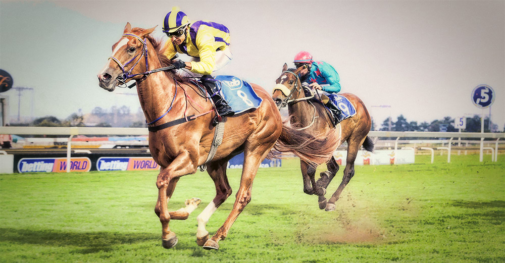 Scandal on debut at Turffontein with Fanie Chambers up / JC Photos (p)
