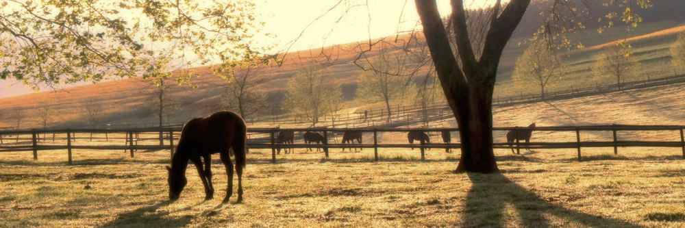 horse-paddocks-at-sunset.jpg