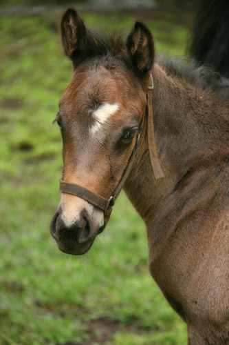 Colt foal by Var out of Clematis