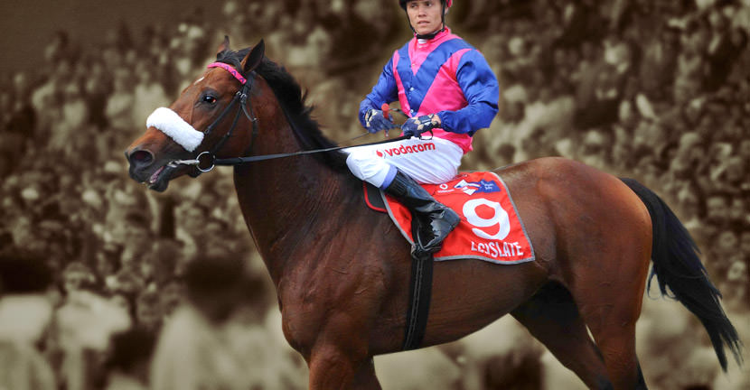 Legislate - Cape Horse Of The Year