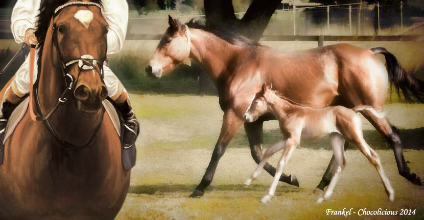 frankel chocolicious filly foal