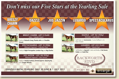Backworth Stud draft for the 2011 KZN Yearling Sale