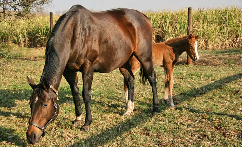 Lewinsky's Lover with filly foal by Muhtafal