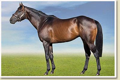 Jay Peg Stallion