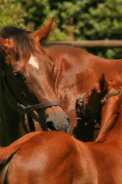 merriment-atso-colt-foal.jpg