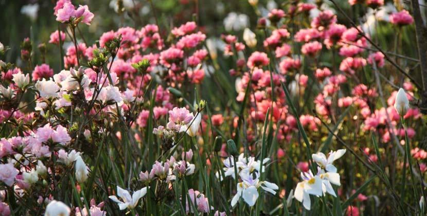 backworth-spring-2.jpg