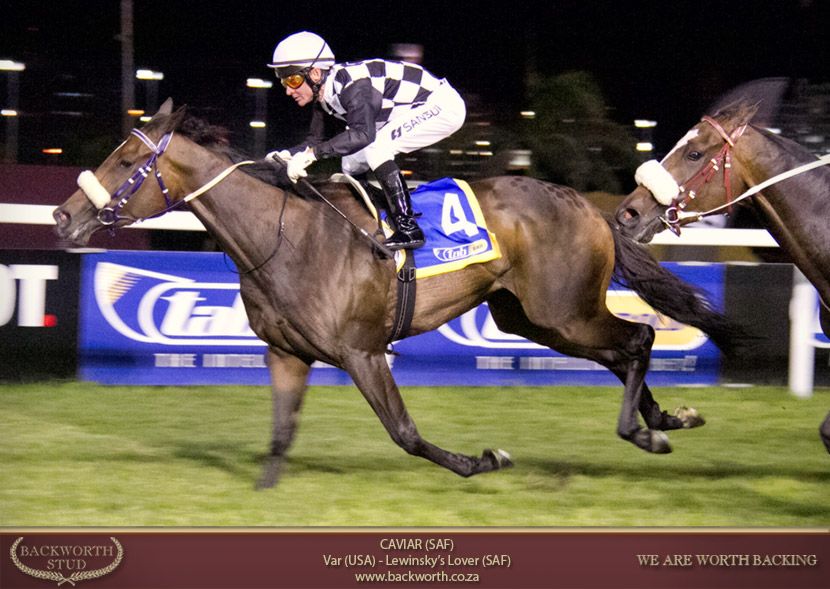 caviar horse