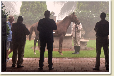 National Yearling Sale Inspection at Backworth Stud