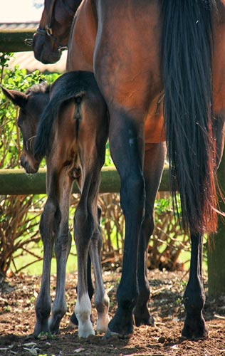 Filly foal by National Emblem out of Forbidden Woods