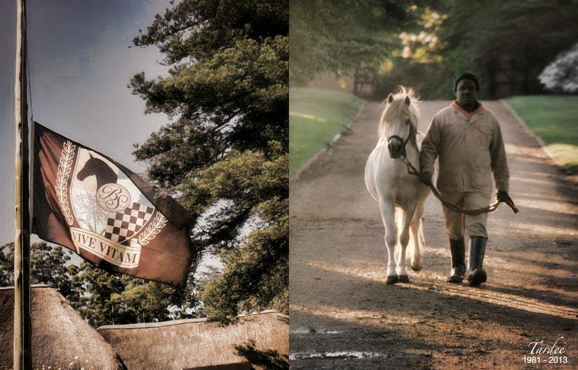 tardee-teaser-stallion-1.jpg