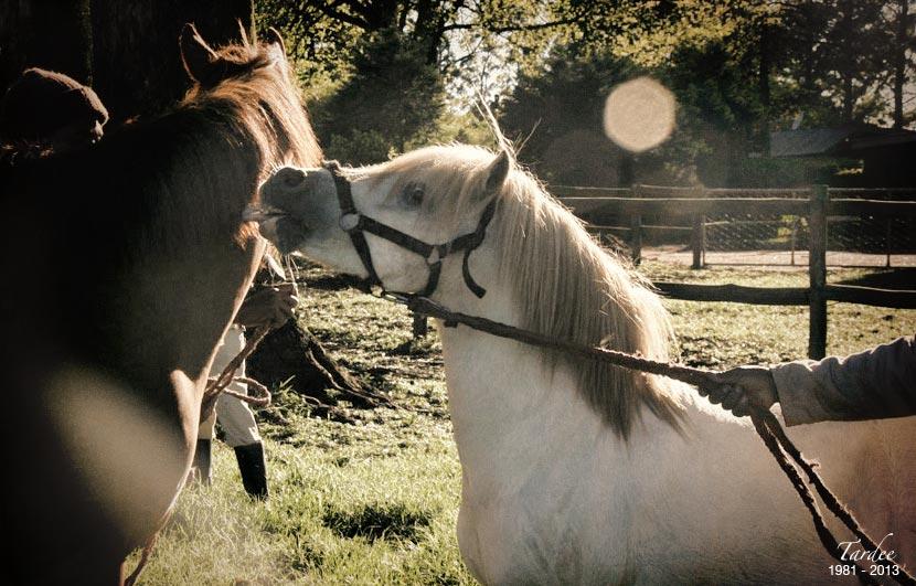 tardee-teaser-stallion-2.jpg