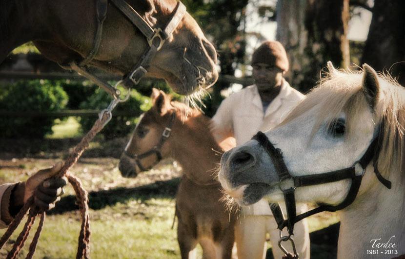 tardee-teaser-stallion-3.jpg