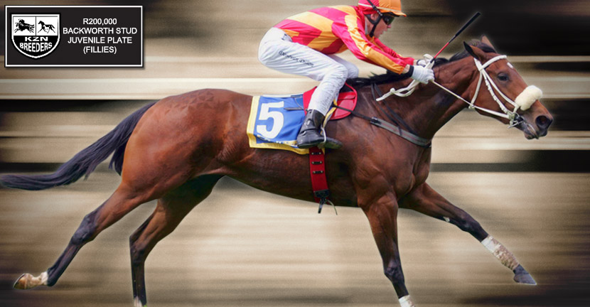 backworth stud kzn breeders juvenile maiden plate fillies