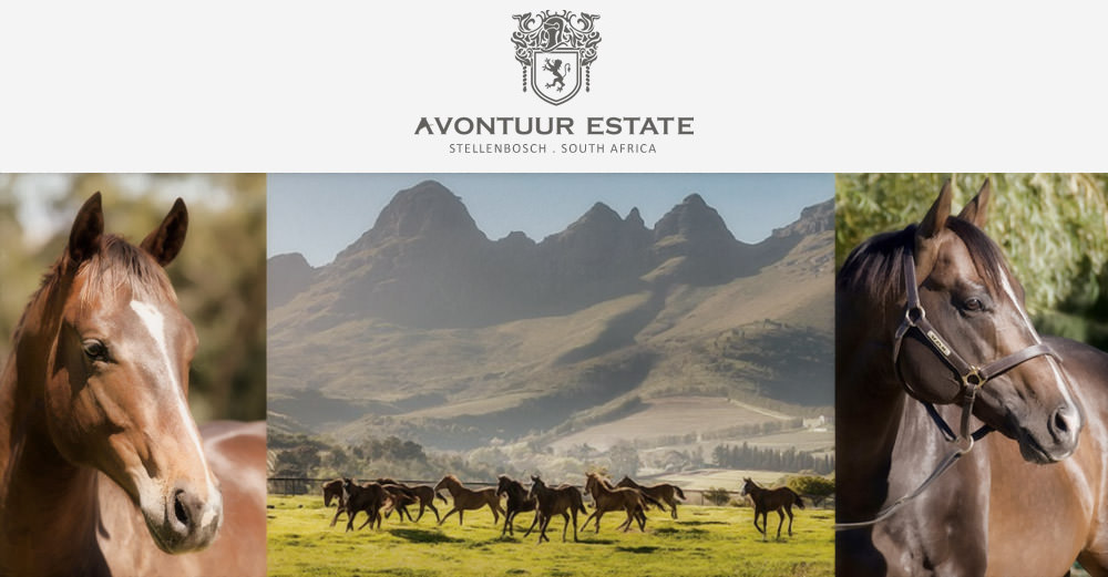 cape premier yearling sale - avontuur stud