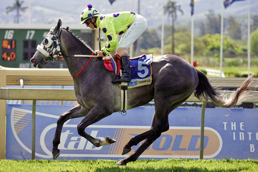 Luxardo Horse