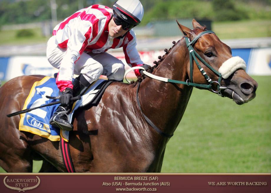 bermuda breeze horse