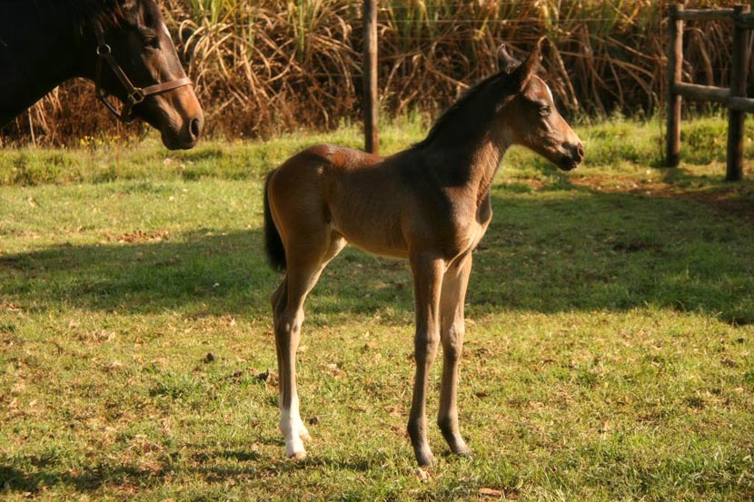 Var - National Seeker Colt Foal