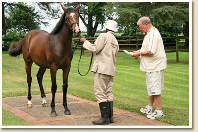 John Kramer inspects Yearling