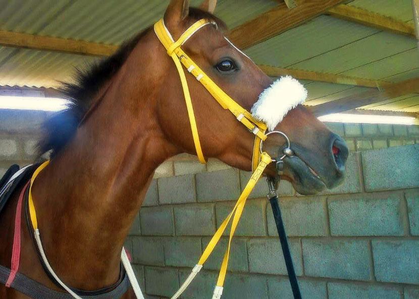 Rare Distinction Horse