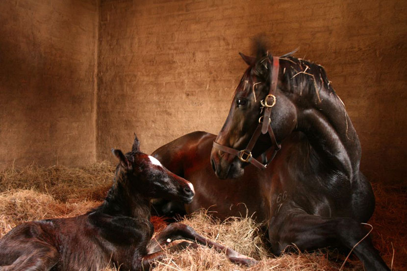 western-winter-dancing-royale-colt-foal-1.jpg