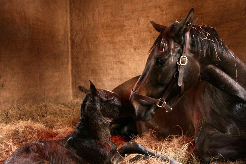 western-winter-dancing-royale-colt-foal-2.jpg