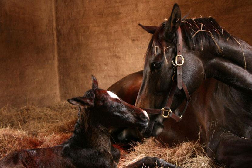 western-winter-dancing-royale-colt-foal-3.jpg