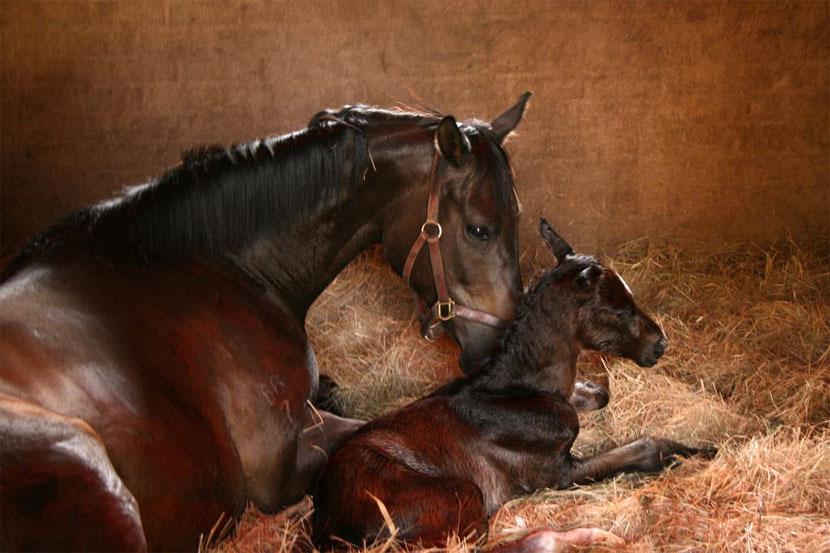 western-winter-dancing-royale-colt-foal-4.jpg