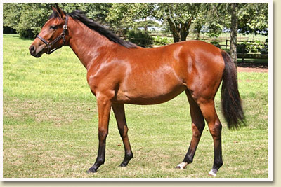 kzn yearling sale 2010 top lot miss kitty by black minnaloushe out of miss unimac