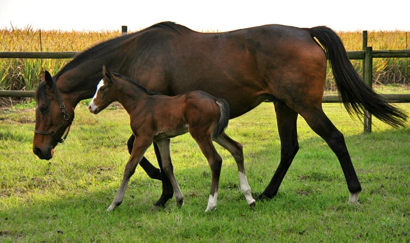 Filly Foal by Miesque's Approval out of Battalia