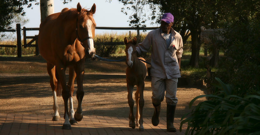 Golden Sword - Car Park Queen Colt Foal 1
