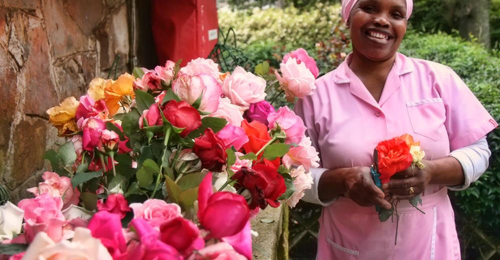 Rose Garden - South Africa 1