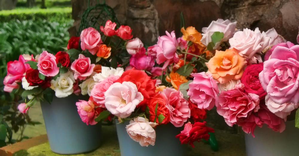 Rose Garden - South Africa 2