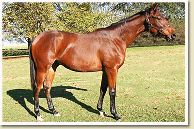 kzn yearling sale 2010