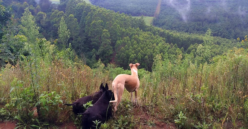 Our Scotties and Dillyn's Whippet enjoying the farm views / Ian Todd (p)