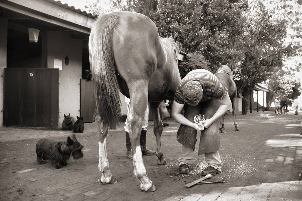 The Farrier at Work 5