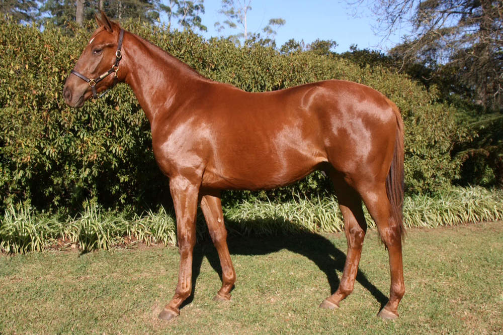 Annio Dominus (King's Chapel - Auburn Annio) - 2015 KZN Yearling Sale