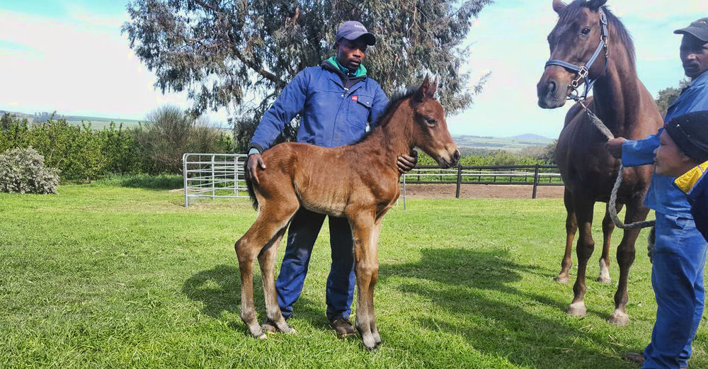 Colt Foal by Curved Ball out of First Again