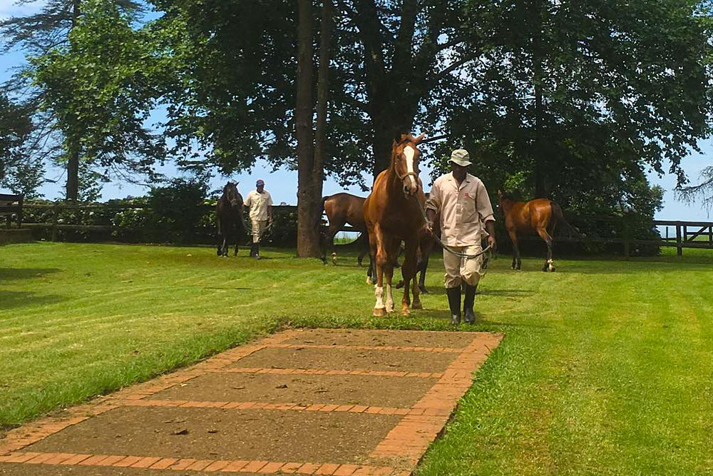 Still on the market. Yearling inspection by Kerry Jack and Paddy Kreyer