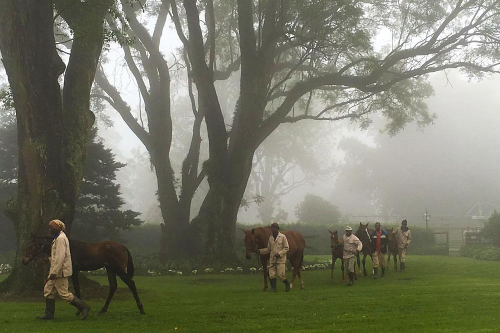 Looking at our yearlings