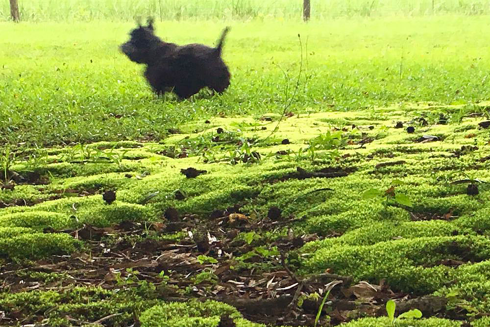 Dogs playing by the moss