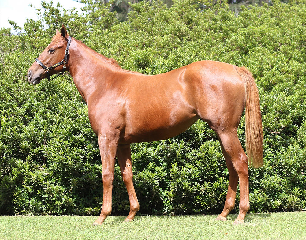 National Yearling Sale 2016