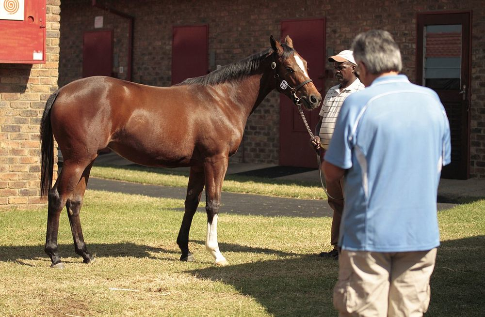 BSA National Yearling Sale