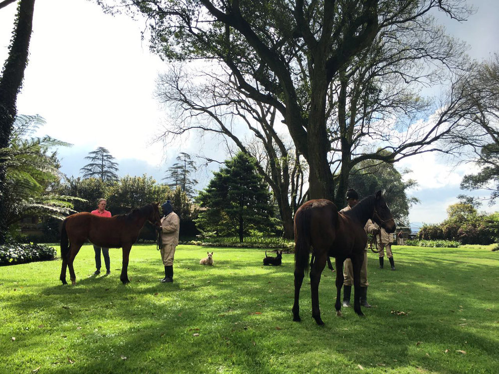 Yearling Inspection 12
