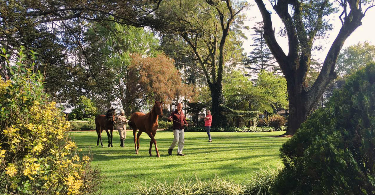 A Perfect Day to Inspect Yearlings