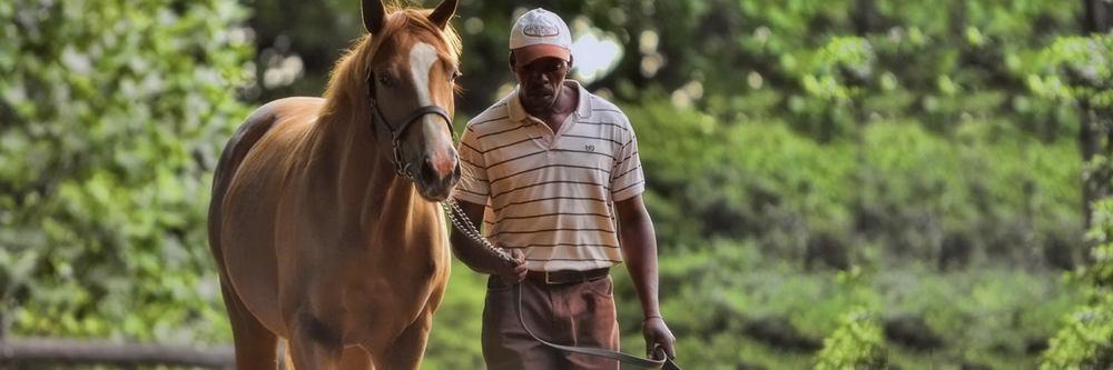 thoroughbred-racehorse-breeder.jpg