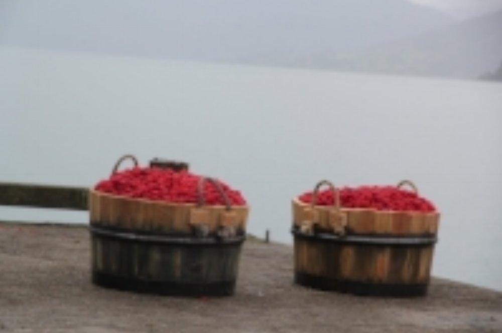 bær i stampar.JPG